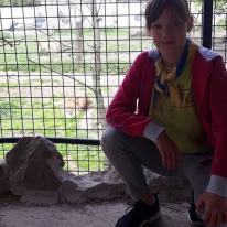 Olmense zoo Kawellen